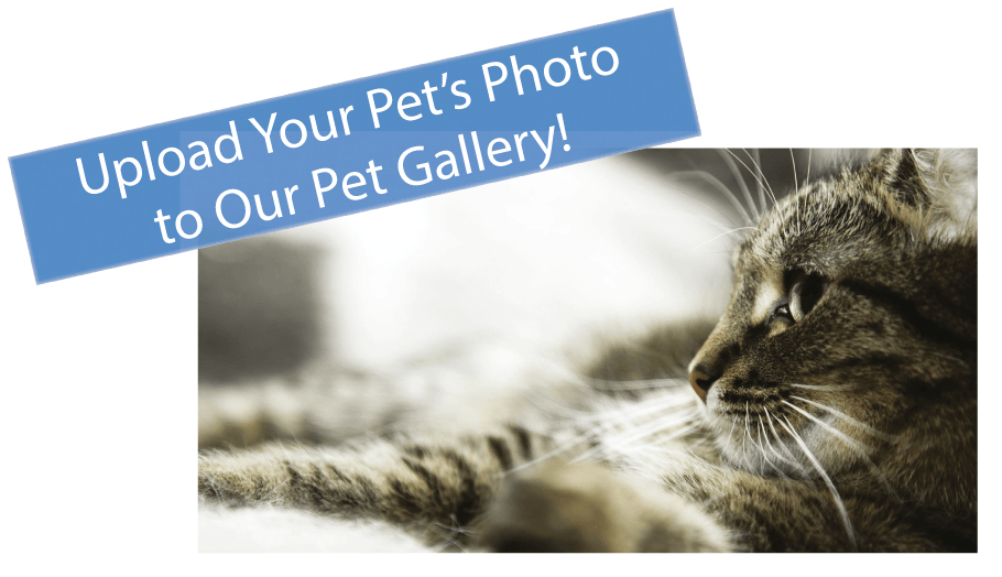 All Creatures Small Animal Hospital pet gallery! Click here to see more